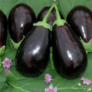 Seminte vinete HA09206 F1 (250 seminte), fructe mari, Fito Semillas
