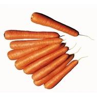 Senator F1 - 100.000 seminte - Seminte de morcov cu forma cilindrica si fructe de o culoare buna de la Clause