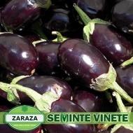 Zaraza - 5 gr - Seminte de Vinete Soi Romanesc Semi-Timpuriu de la SCDL Buzau