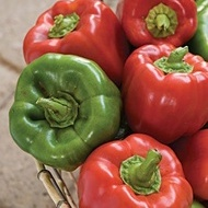Ardei gras CALIFORNIA WONDER - 50 gr - Seminte de Ardei Gras Soi timpuriu Fructe Mari