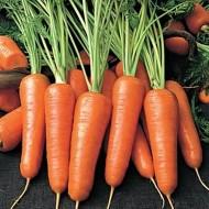 Aurantina F1 - 100.000 sem - Seminte de morcovi cu forma cilindrica spre conica avand o maturitate deplina la 120 de zile de la Takii Seeds