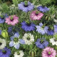 Barba Imparatului Mix (1 g), seminte flori Nigella damascene de la Opal