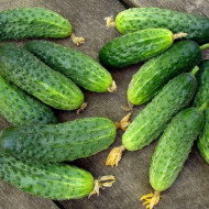 Castraveti Paris Small Green (1 kg), seminte de castraveti cornison soi timpuriu, inflorire mixta, Agrosem