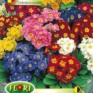 Ciubotica Cucului Mix (100 seminte) Flori Ciubotica Cucului, Florian