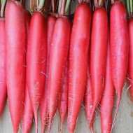 Datil Escarlata (4 gr) seminte de ridichi cilindrice semilungi rosii, soi timpuriu, Agrosem