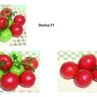 DORINA F1 - 5 gr - Seminte de Rosii Bulgaresti Profesionale