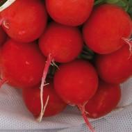 Estela - 250 grame - Seminte de ridichi cu bulbi de culoare rosie foarte apreciate in randul cultivatorilor in special pentru structura interna a bulbilor si pentru uniformitatea productiei de la Enza Zaden