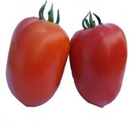 Galilea F1 (50 seminte) seminte rosii semideterminate, forma ovala. Hazera