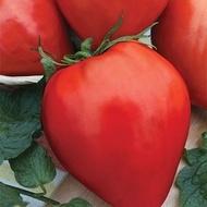 Lacrimile Fecioarei (Lacrima Fetei, Momini Salzi) - 500 seminte Rosii soi nedeterminat semi-timpuriu Gigant