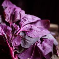 Loboda Rosie (300 seminte) de loboda rosie calitate superioara, Prima Sementi