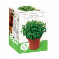 Magheran - Kit plante aromatice