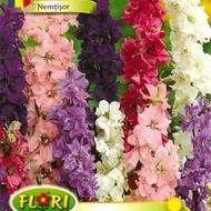 Nemtisor 2 - Seminte Flori Nemtisor de la Florian