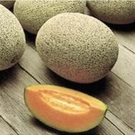 Portogalia F1-100 sem- seminte pepene galben tilp Galia,pulpa portocalie de la Hazera