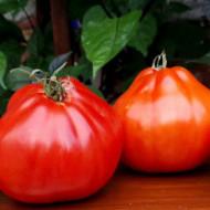 Red Pear (500 seminte) tomate in forma de para soi italian, crestere nedeterminata, Vitesse