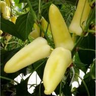 Reka F1 - 1000 sem - Seminte de ardei conic cu crestere nedeterminata destinat culturii fortate avand fructele in poztie verticala forma aspectuasa albe si dulci de la Duna-R