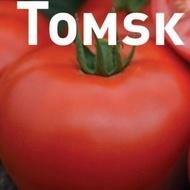 Rosii olandeze Tomsk F1 – 1000 sem - de rosii determinate Bejo Olanda