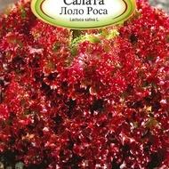 Salata LOLO ROSA - 3 gr - Seminte de Salata Soi semitimpuriu Florian Bulgaria