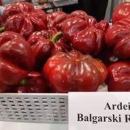 Seminte Ardei Gogosar Rotund Bulgaresc (50 gr), soi foarte productiv, Opal