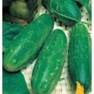 Seminte castraveti Levina Mix F1 (250 seminte), hibrid semitimpuriu, Seminis