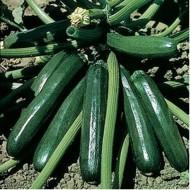 Seminte dovlecel Ambassador F1 (100 seminte), verde inchis, Seminis