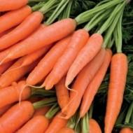 Seminte morcovi Champion F1 (100.000 seminte), timpuriu, Syngenta