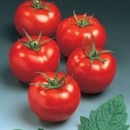Seminte rosii Sympathie F1 (5 grame), timpurii, Seminis
