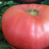 Seminte tomate Rozali (0.5 gr), soi roz Nedeterminat tip Gigant cu tulpina inalta, Florian