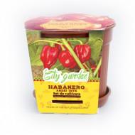 Set de cultivare - Ardei iute Mexican Habanero Roșu, Colectia City Garden