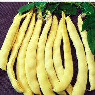 Tescana (50 grame) seminte fasole urcatoare, pastai eliptic ovale, galbene, lungi, fara ate, Mefim