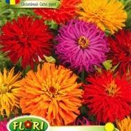 Carciumareasa CACTUS GIGANT - Seminte Flori Carciumareasa de la Florian