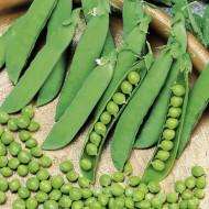 Alderman (500 gr) seminte de mazare cu port inalt, Agrosem