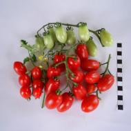 Alya IZK (300 seminte) tomate tip cherry oval alungite, gust echilibrat dulce-acru, de la IZK Bulgaria