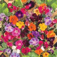 Amestec de flori anuale cataratoare (2 g), plante cu flori viu colorate, urcatoare, Opal