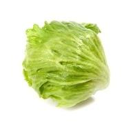 Argentinas - 1000 sem - Seminte drajate de salata tip Iceberg cu capatana medie spre mare rotunda usor aplatizata ce se preteaza cultivarii cu plantare de la sfarsitul lunii aprilie pana la inceputul lunii august de la Rijk Zwaan
