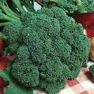 Broccoli Calabrese - 3 gr - Seminte de Broccoli Semitimpurii Calabrese