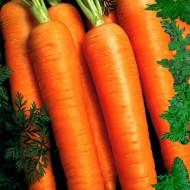 Calibra F1 - 25.000 sem - Seminte de morcovi cu radacina lunga usor conica neteda si aspect placut care ajung la maturitatea deplina dupa 90 de zile de la Agrisemen