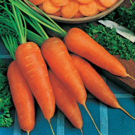 Chantenay Red Cored (500 gr) seminte de morcovi soi semi-tardiv, Agrosem