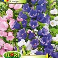 Clopotei - Seminte Flori Clopotei de la Florian