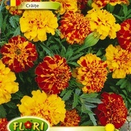 Craite Bonita Mix - Seminte Flori Craite Bonita de la Florian