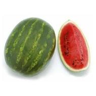 Crimson Ruby F1 - 1000 sem - Seminte de pepene verde ce leaga masiv si uniform asigurand productii foarte ridicate cu fructe uniforme aproape identice avand o prezentare deosebita si coaja lucioasa de la Sakata