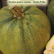 Dovleac Danka Polka (8 seminte), dovleac soi productiv, pentru seminte gustoase, buna calitate, Agrosem