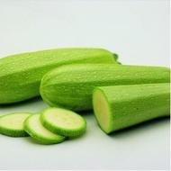 Dovlecei Otto F1 - 1000 seminte de Dovlecei hibrid timpuriu verde deschis