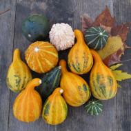 Dovlecel ornamental mix (1 g), seminte de dovleac decorativ cu fructe in diferite combinatii de forme si culori, Opal
