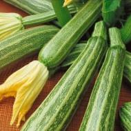 Dovlecel Striato D' Italia (3 gr) seminte de dovlecei, tip zucchini neobisnuit de atractiv, Agrosem