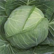 Emily F1-1000 sem.-seminte de varza alba,50-55 zile,cultura neprotejata de primavara, 2 kg, de la Hazera