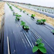 Folia de mulcire neagra legume in sere si solarii latime 1.2m/30mic/rola 1000m (15.51Ron/Kg), polietilena de calitate superioara, Sotrafa