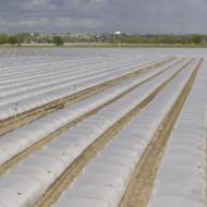 Folie mulch transp. 120cm/15mic/2000m, folie mulcire polipropilena de calitate superioara, Achaika Plastics