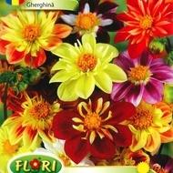 Gherghina Colorate Mix Dalia - Seminte Flori Gherghina de la Florian