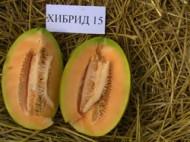 Hibrid 15 F1 (1 gr) seminte Pepeni Galbeni bulgaresti feliati Florian