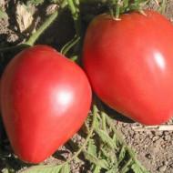 Inima de Bou Roz (1 kg), seminte de rosii soi semitimpuriu, gust excelent, Agrosem